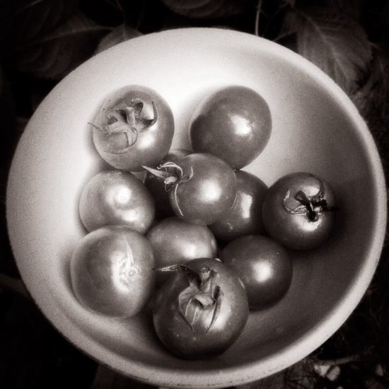 fine art photography, organic tomatoes, long island, holiday print sale