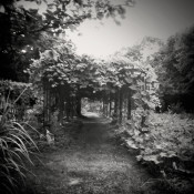 Magic Garden thumbnail