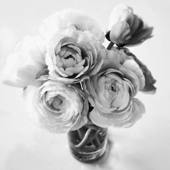 fine art photography, black and white photography, flora, still life
