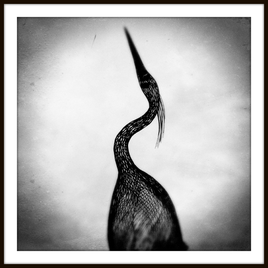 landscape photography, fine art black and white heron
