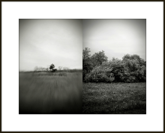 fine art photography, landscape photography, exhibition, huntington, new york, the forrest